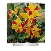 Red Yellow Orchids Shower Curtain