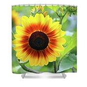 Red Yellow Sunflower Shower Curtain