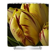 Red Yellow Tulip Shower Curtain
