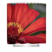 Red Zina Shower Curtain