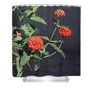 Red Zinnia Flowers Shower Curtain
