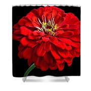 Red Zinnia Shower Curtain