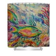 Redband Parrotfish Shower Curtain