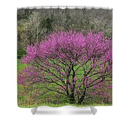 Redbud And Field In Jefferson County Shower Curtain