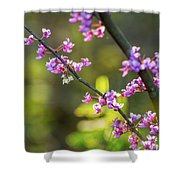 Redbud Bloom  Shower Curtain