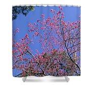Redbud In Bloom Shower Curtain