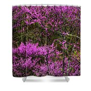 Redbud In The Woods Shower Curtain