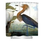 Reddish Egret, Shower Curtain by Granger