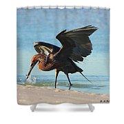 Reddish Egret Nabs A Fish Shower Curtain