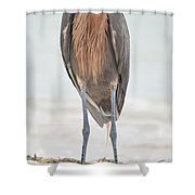 Reddish Egret Stands Tall Shower Curtain