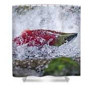 Redfish  Shower Curtain
