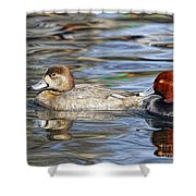 Redhead Duck Pair Shower Curtain