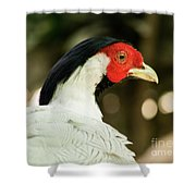 Redheaded Bird Portrait. Shower Curtain