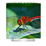 Redheaded Dragonfly Shower Curtain