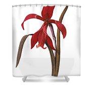 Redout�: St. James Lily Shower Curtain