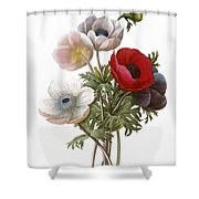 Redoute: Anemone, 1833 Shower Curtain