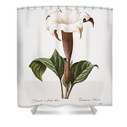 Redoute: Datura, 1833 Shower Curtain
