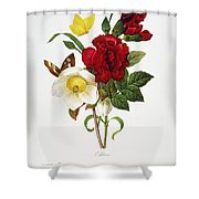 Redoute: Hellebore, 1833 Shower Curtain