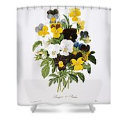Redoute: Pansy, 1833 Shower Curtain