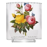 Redoute: Roses, 1833 Shower Curtain