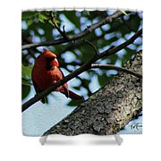 Red's Ray Of Light Shower Curtain
