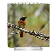 Redstart Shower Curtain