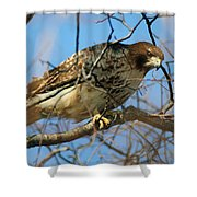 Redtail Among Branches Shower Curtain