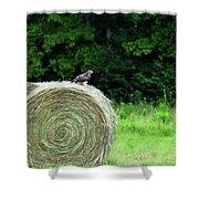 Redtailed Hawk Shower Curtain