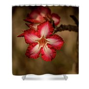 Redwhite Flower Shower Curtain