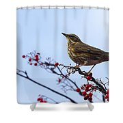 Redwing  - 2 Shower Curtain