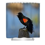 Redwing Morning Shower Curtain