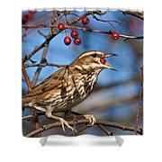 Redwing With Berry Shower Curtain