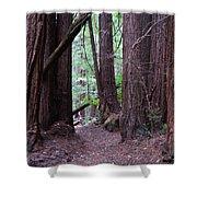 Redwood Grove Shower Curtain