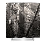 Redwood Mystery Shower Curtain