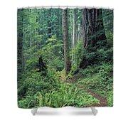 Redwood Park Trail Shower Curtain