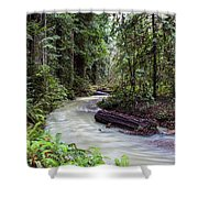 Redwood Stream Shower Curtain