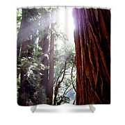 Redwood Sunlight Shower Curtain
