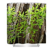 Redwood Tree Art Prints Baslee Troutman Shower Curtain