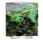 Redwood Tree Forest Fern Art Prints Ferns Giclee Baslee Trouman Shower Curtain