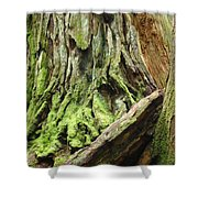 Redwood Trees Art Prints Baslee Troutman Shower Curtain