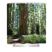 Redwood Trees Forest California Redwoods Baslee Shower Curtain