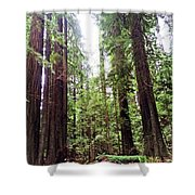 Redwood2 Shower Curtain