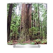 Redwood4 Shower Curtain