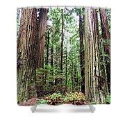 Redwood5 Shower Curtain
