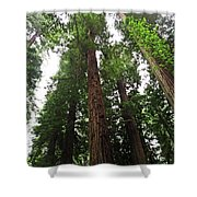 Redwood6 Shower Curtain