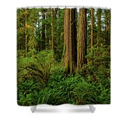 Redwoods And Ferns Shower Curtain