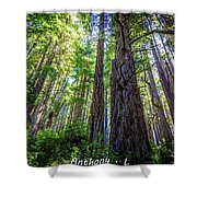 Redwoods National Forrest Trees Of Mistery Shower Curtain