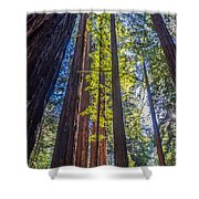 Redwoods Of Muir Woods Shower Curtain