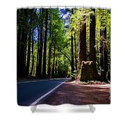 Redwoods Road Shower Curtain