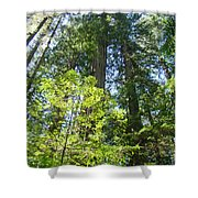 Redwoods Trees Forest Art Prints Baslee Troutman Shower Curtain